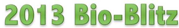 bio-blitz